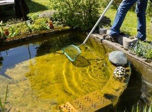 Как очистить пруд на дачном участке