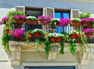 Петунии на балконе