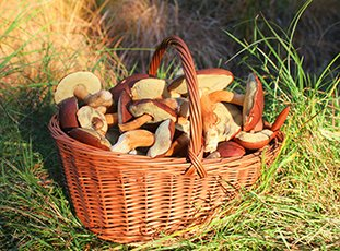 Как правильно хранить свежие грибы в домашних условиях