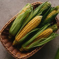 Как хранить кукурузу в початках в домашних условиях