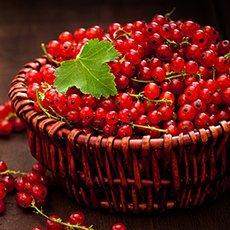 Как сохранить красную смородину на зиму в свежем виде: рецепты и полезные рекомендации
