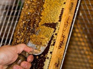 Весенняя подкормка пчел: что это такое и зачем она нужна