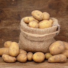 Картофель «Тулеевский»: описание сорта, фото и отзывы