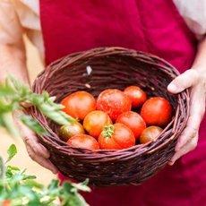 Самые урожайные сорта томатов для теплиц и открытого грунта