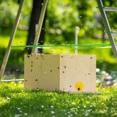 Ловушки для пчел