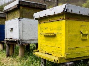 Пчелиный улей своими руками: о чем следует знать