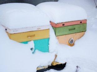 Зимовка пчелиной семьи: как благополучно дожить до весны