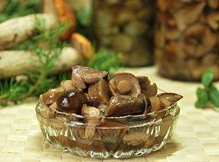 Маринованные обабки на зиму: рецепты заготовки грибов