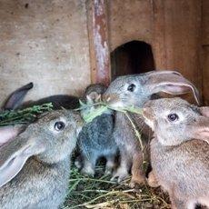 Разведение кроликов методом Михайлова: клетки, особенности конструкции, описание способа
