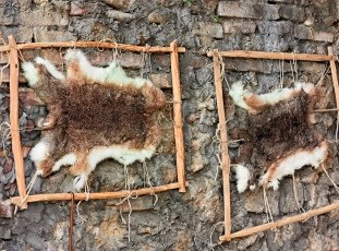 Выделка шкур кроликов в домашних условиях