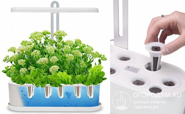 Автоматическая гидропонная система для выращивания растений в домашних условиях