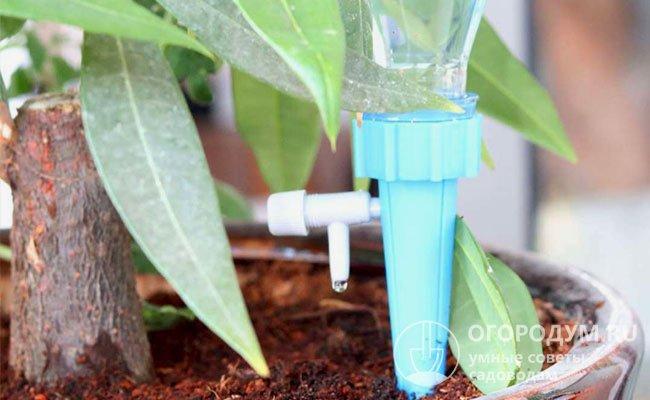 Автоматический полив для садовых растений