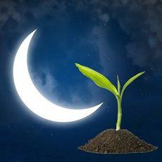 Лунный посевной календарь на апрель 2021