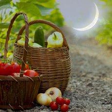 Лунный посевной календарь на август 2021