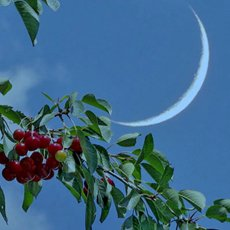 Лунный посевной календарь для огородников на июль 2021