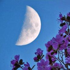 Лунный посевной календарь на июнь 2021