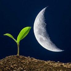 Лунный посевной календарь на май 2021