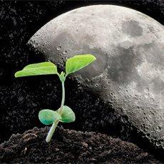 Лунный посевной календарь на март 2021