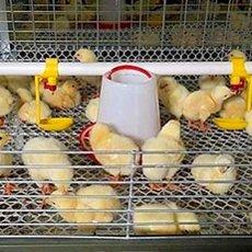 Клетка для цыплят