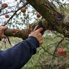 Обрезка яблонь осенью для начинающих