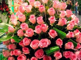 Роза «Белла Вита»: описание сорта, фото и отзывы