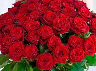 Роза «Гран При»: описание сорта, фото и отзывы