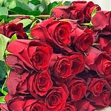 Роза «Эксплорер»: описание сорта, фото и отзывы