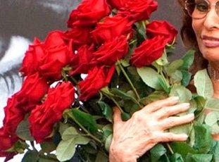 Роза «Софи Лорен»: описание сорта, фото и отзывы